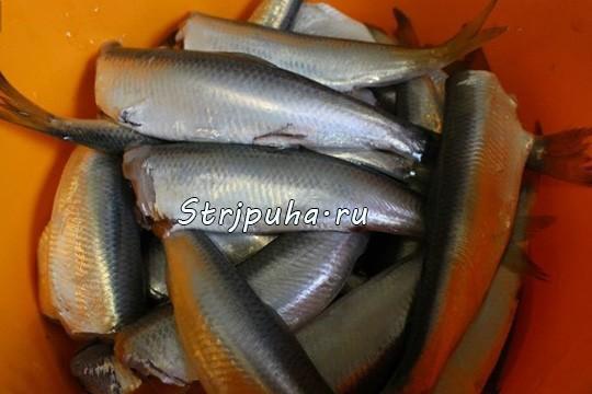 ryba_pod_m1